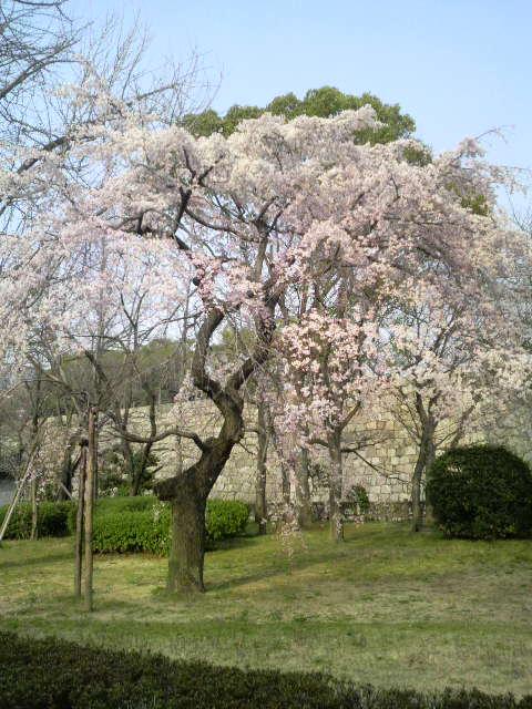 春を見ーつけた
